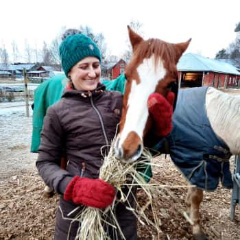 Från männens arbetskamrat till tjejers hobby - hästens förändrade betydelse
