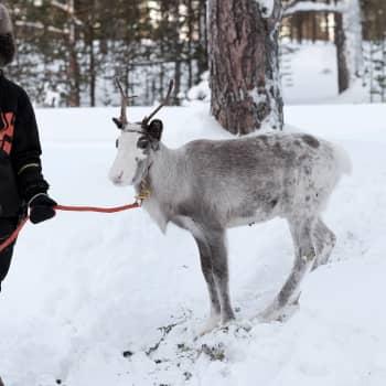 Puásuialmaa tiervasvuotâ Jussa Seurujärvi