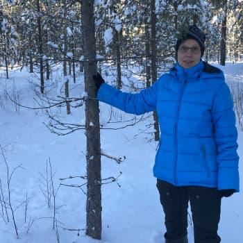 Metsä kannattaa pitää kunnossa - perikuntien ei kannata riidellä rahanarvoisen omaisuuden hoidosta