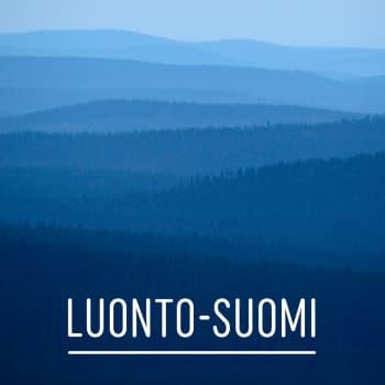 Luonto-Suomi.: Kanahaukka-kojulla 16.2.2011