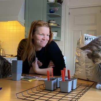 Viherpeukaloilla syyhyää kovasti - Elina Holopainen aloitti kevätkylvöt tomaateista.