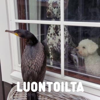 Päivystäjä ikkunan takana