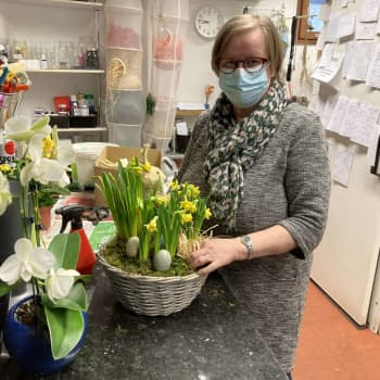 Narsissit etsivät kotia Kouvolan Elimäellä