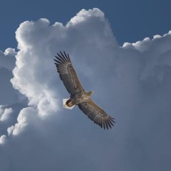 Lentävä räsymatto