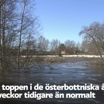 Vårflödet i de österbottniska åarna