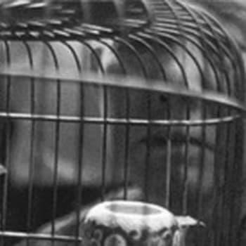 Hongkong, dzonkkien ja pakolaisten kaupunki (1962)