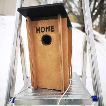 Huhtikuussakin ehtii vielä linnunpöntön asennushommiin – Juha Laaksonen antaa vinkkejä asennustöihin