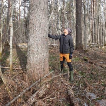 Kotisalon metsä pikakeräyksellä Luonnonperintösäätiön suojiin