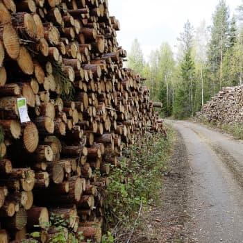 """Metsäteollisuus ei ole tiensä päässä, vaan """"kultaisen polun mutkassa"""""""