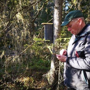 Partiolaiset urakoivat 30 linnunpönttöä vanhaan metsään