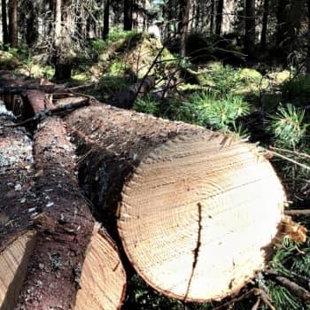 Kristiserat skogscertifikat kan bli tung barlast på den internationella marknaden