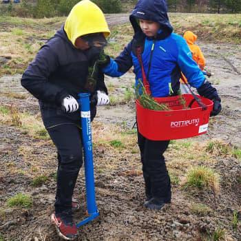 Koululaiset istuttivat 400 puuta Tornion kaupungin juhlavuoden kunniaksi