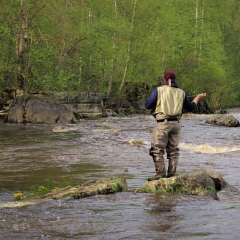 Moni ensikertalainen jäi koukkuun kalastukseen - kalastonhoitomaksuja maksetaan ennätyksellisen viime vuoden tahtiin