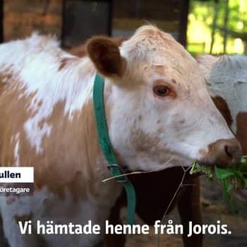 Möt killingen Sipe och några av de 47 andra djuren på husdjursgården Lönneberga i Sjundeå