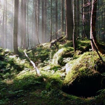 Vill regeringen avskaffa det miljöanpassade skogsbruket?