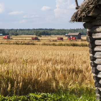 Kuluttajalla ja viljelijällä yhteiset edut ruokatuotannossa