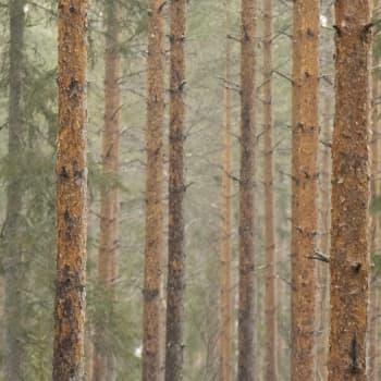 EU:n metsästrategia luo kitkaa hallitukseen ja Euroopan parlamenttiin
