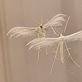 Vad är detta för en insekt