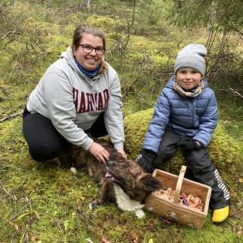 Sienestyskausi on täydessä vauhdissa - Tiia Oikarinen käy sienimetsällä esikouluikäisen poikansa kanssa