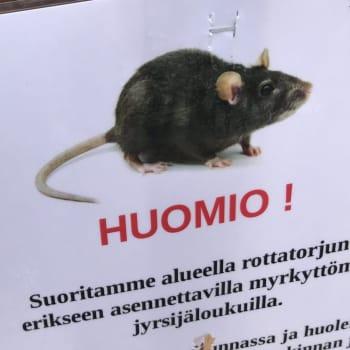 Miten korona on vaikuttanut rottien lisääntymiseen meillä ja maailmalla?