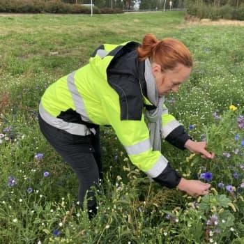 Kukkapelloilta voi hakea ilmaiseksi kukkia Kotkassa