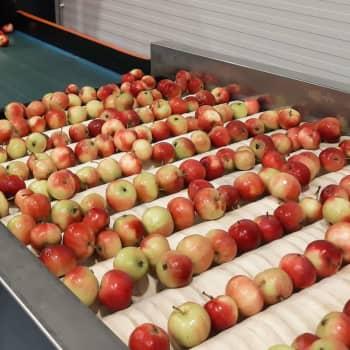 Nya sätt att förvara äppelskörden på Söderlångvik