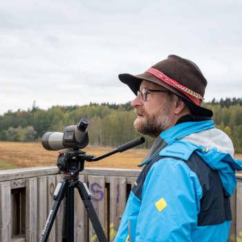 Många olika flyttfåglar i Ruskis just nu - Pontus Rancken har skådat enkelbeckasiner och brushanar