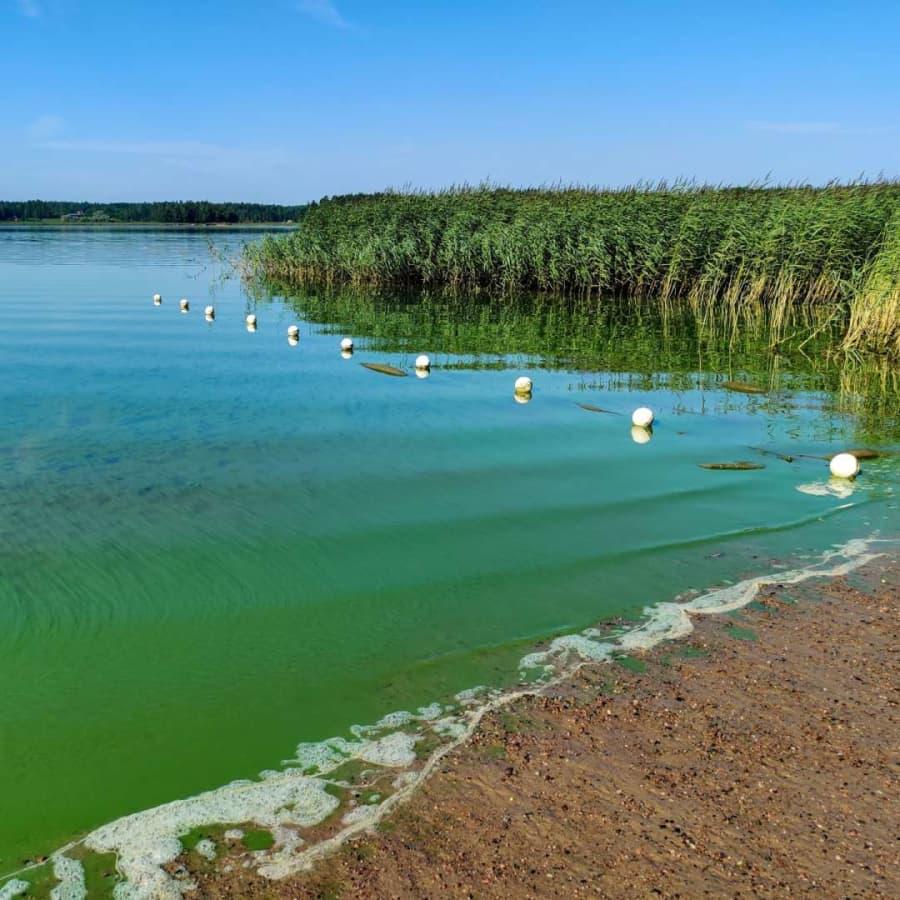 Hur giftiga är cyanobakterierna?
