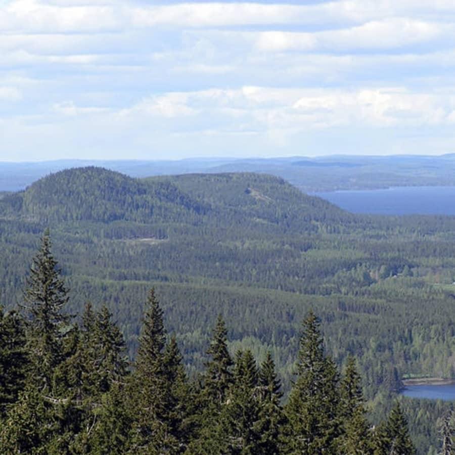 Suomalainen metsäkeskustelu menee usein metsään - koska metsä menee suomalaisilla tunteisiin