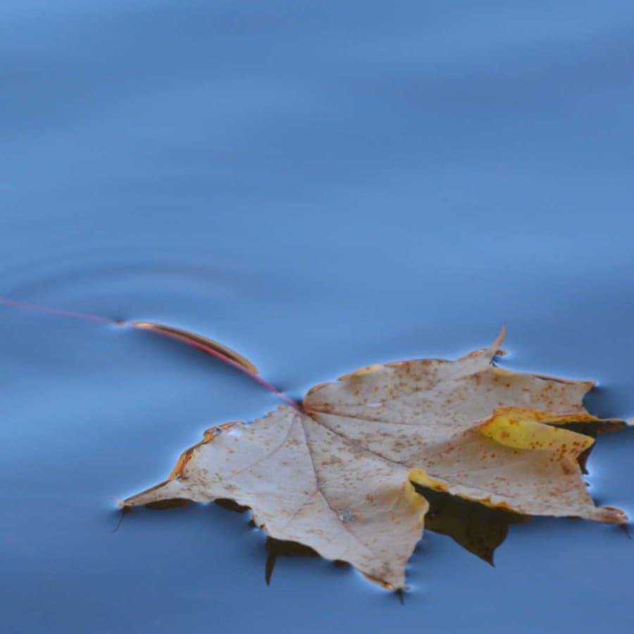 Höstens musik