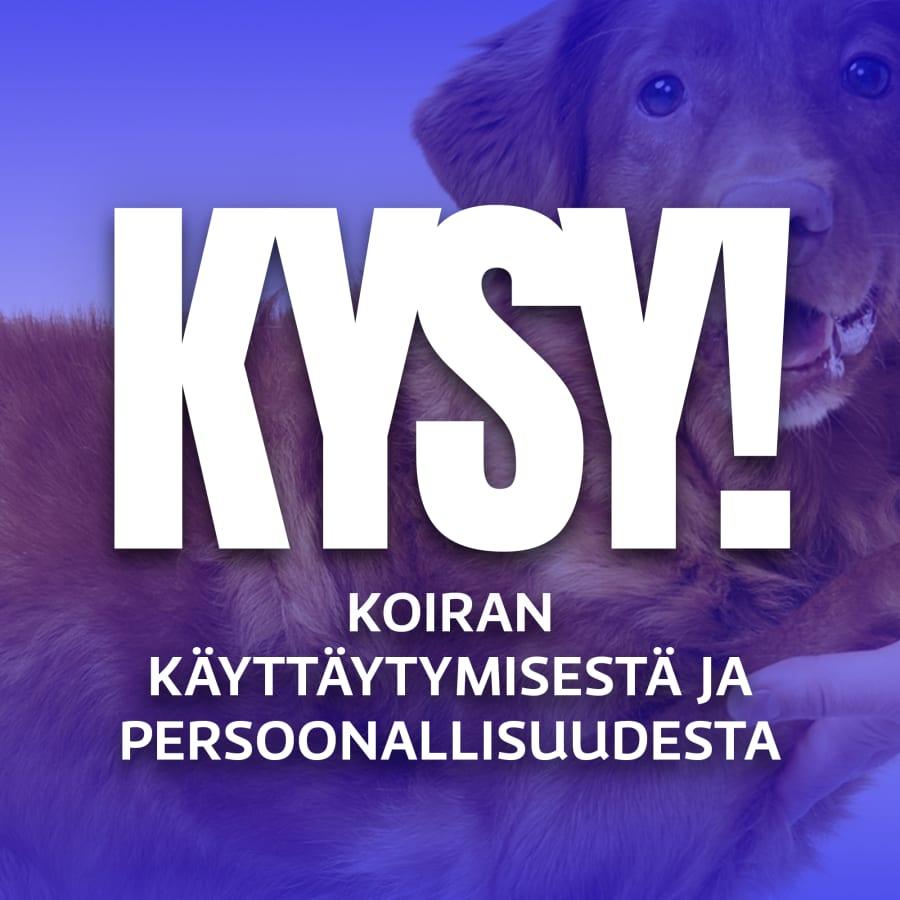 KYSY! koiran käyttäytymisestä ja persoonallisuudesta