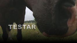 Hajbo testar: Ridning: Att närma sig en häst