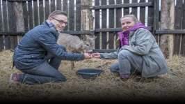 Berättelser från djurpensionatet