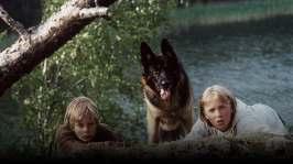 Schäferhunden Roi - Äventyr i skärgården