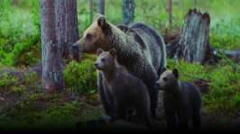 Lilla Tvåan: I björnens rike