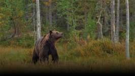 Karhun valtakunnassa saameksi