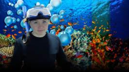 Forskare planterar nya koraller i Stora barriärrevet