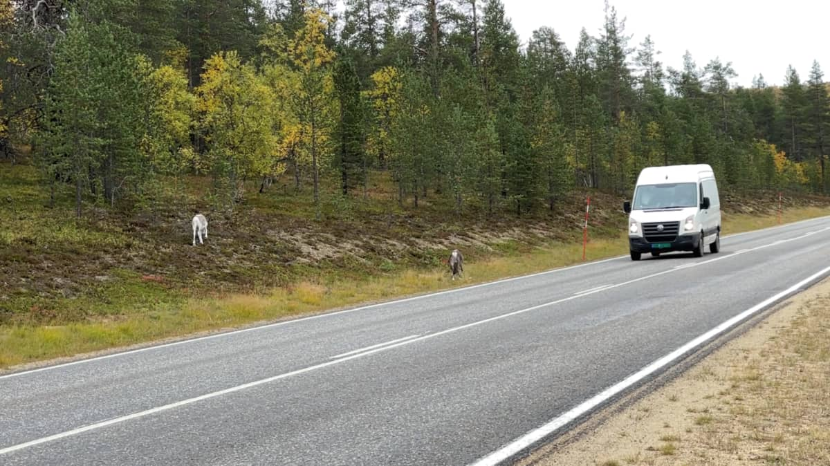 Poroja nelostien laidalla Saariselän Magneettimäessä.