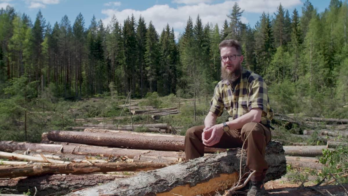 Metsäkoneyrittäjä Tero Kurula istuu hakkuuaukiolla kaadettujen tukkien päällä kesäisenä päivänä.