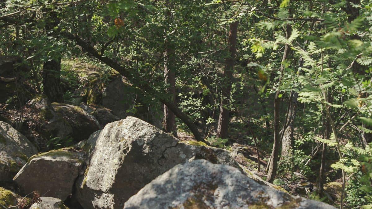 Kalliokielekkeitä aurinkoisessa sekametsässä.