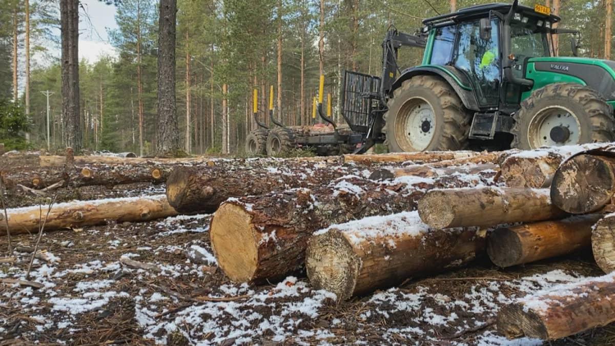 Traktori metsätöissä.