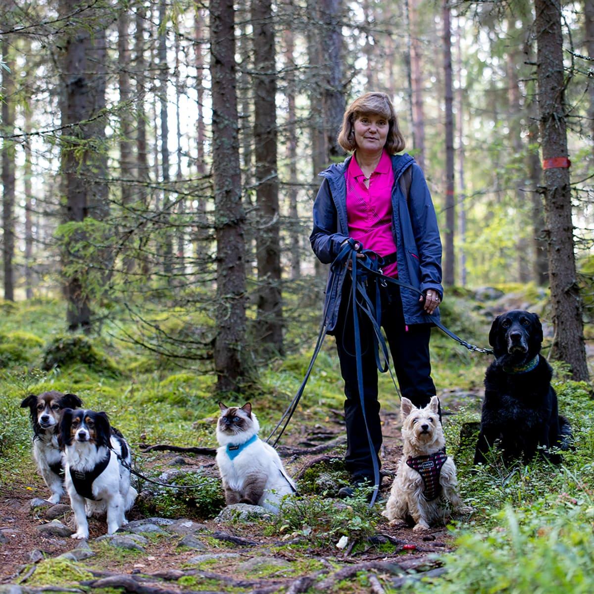Tuula Ojala-Nurmi pitelee koirajengin ja reissukissa Pessin talutushihnoja metsässä polulla. Jaloissa istuu neljä koiraa ja Pessi-kissa.