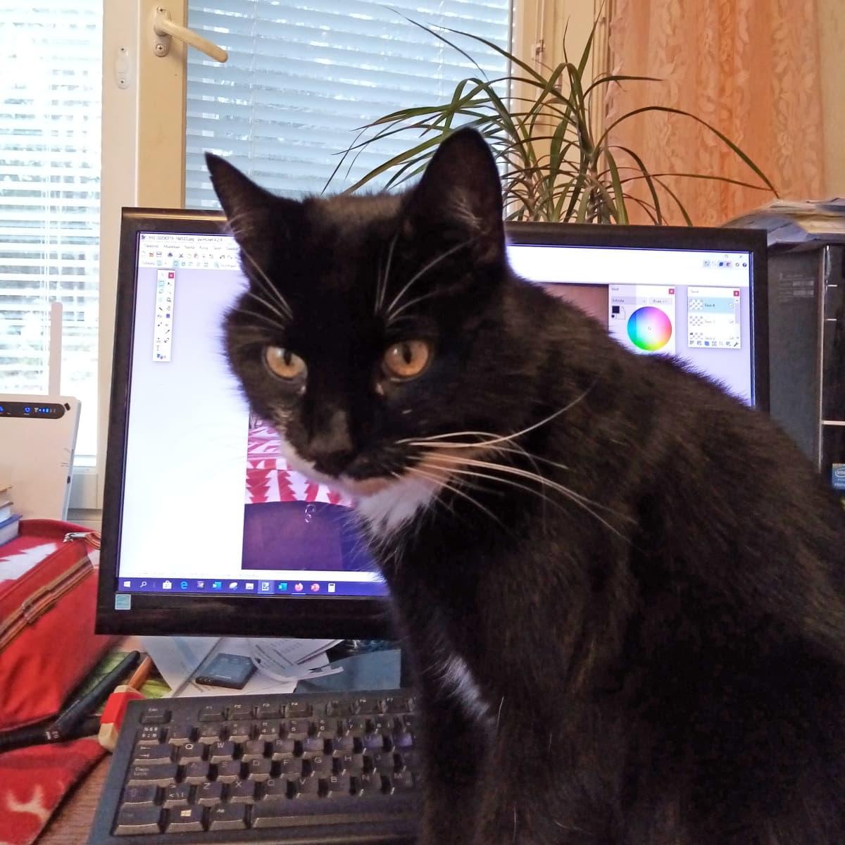 Kissa tietokoneen näytön edessä.