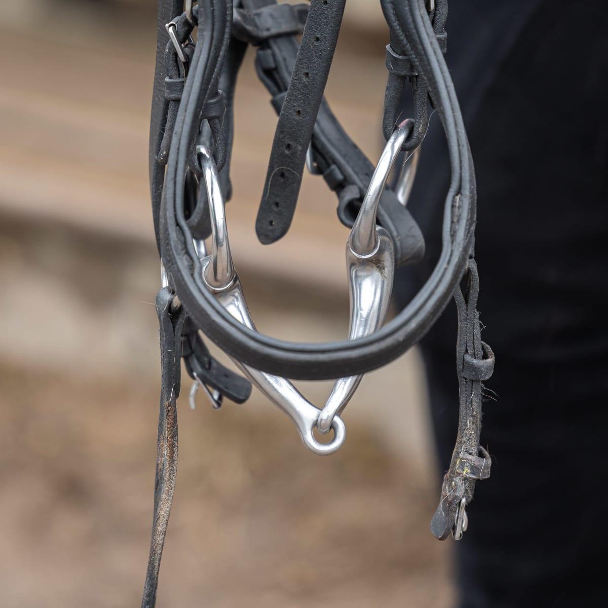 Kuolaimet roikkuvat ratsastajan kädestä.