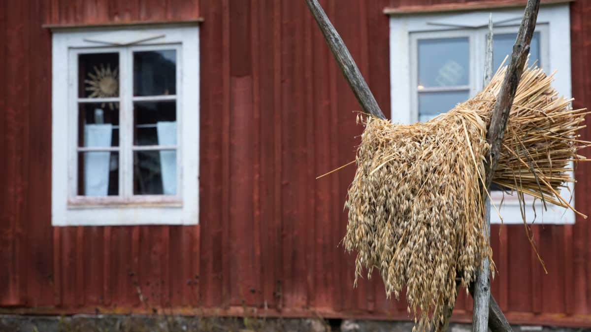 Kauralyhde maalaistalon pihalla
