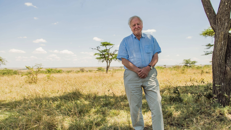 Attenborough seisoo savannilla.