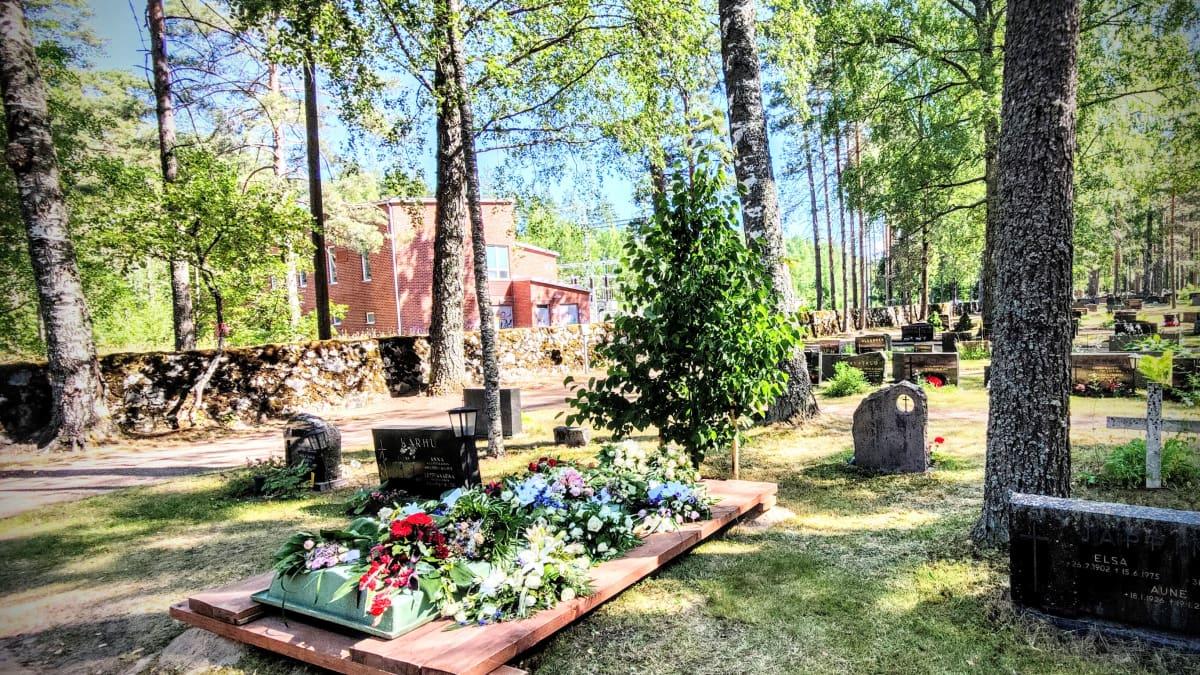 Laila Hirvisaaren haudan päädyssä on lehmus.