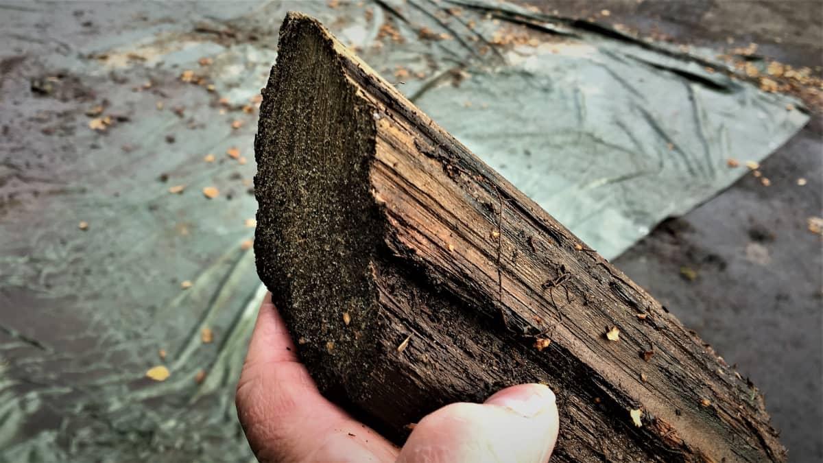 1600-luvulta olevan Hahtiperän hylyn puukappale ennen sen restaurointia.