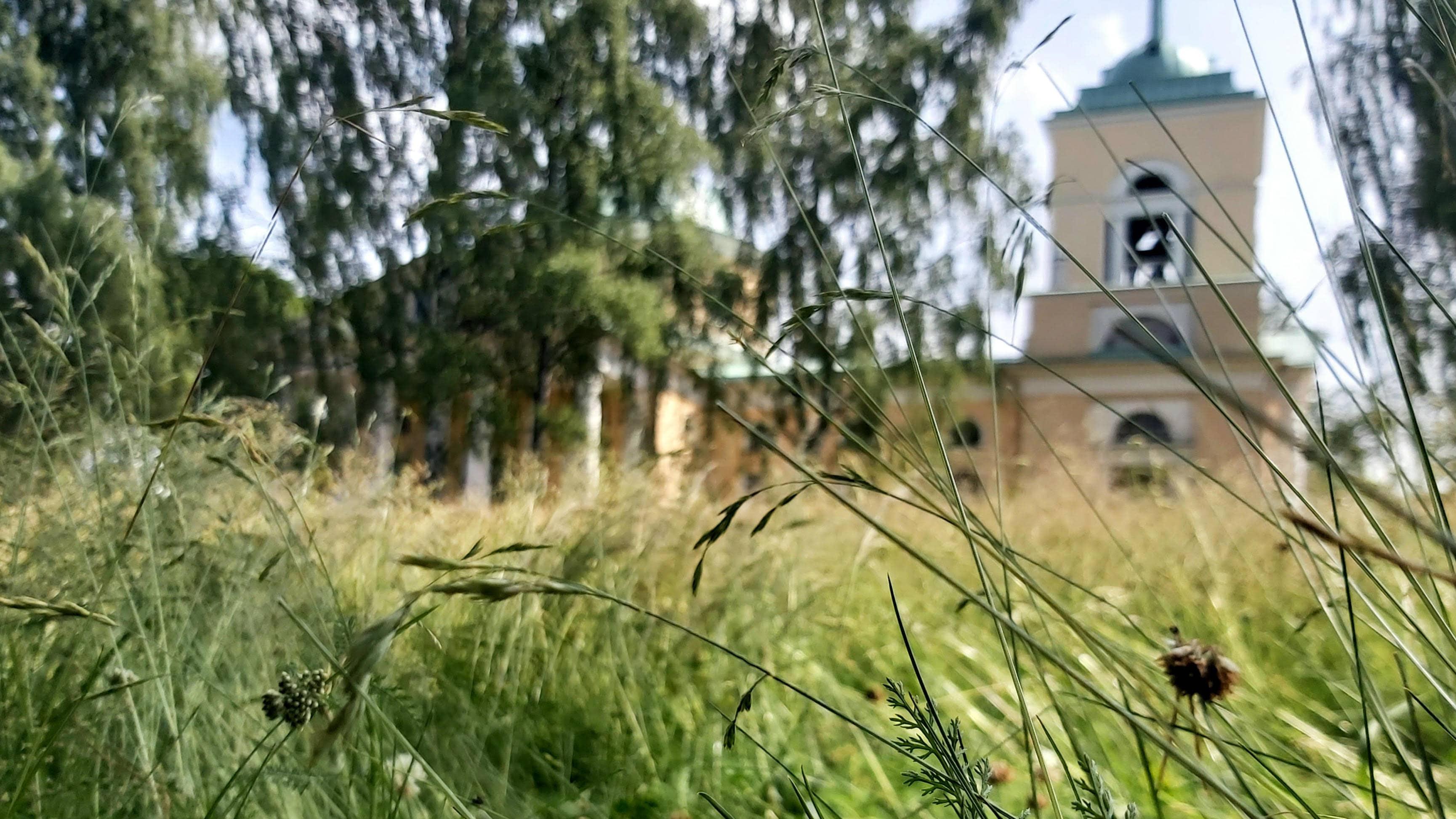 Heinää puistossa ja taustalla Isonpuiston kirkko.