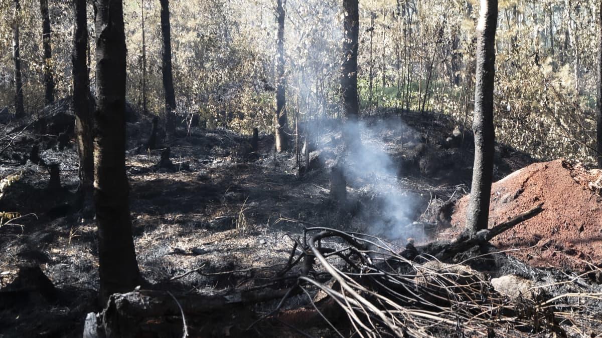 Avua metsäpalon jäljiltä.
